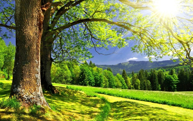 forest-mountains-trees-landscape-summer-sun